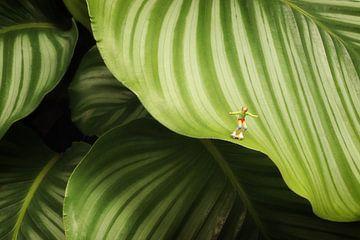 Calathea Orbifolia von Remko Killaars