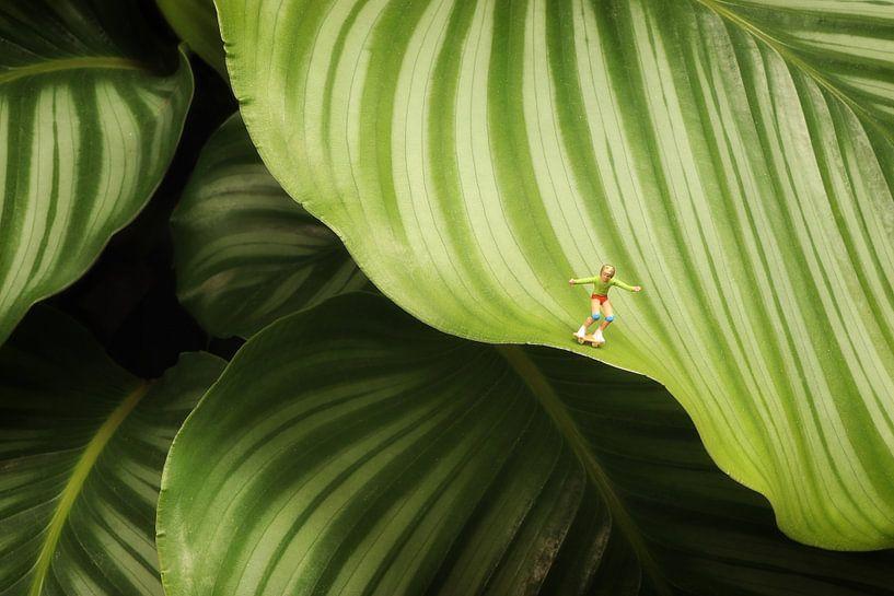Calathea Orbifolia van Remko Killaars