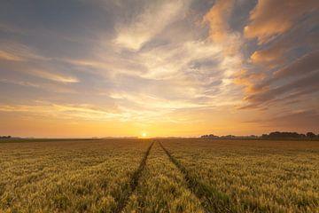 Westeremden Wheat sur Ron Buist