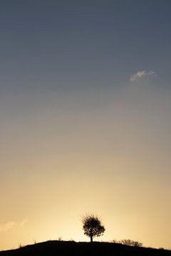 Staand beeld van een eenzame boom in het ochtendgloren van Bas Ronteltap