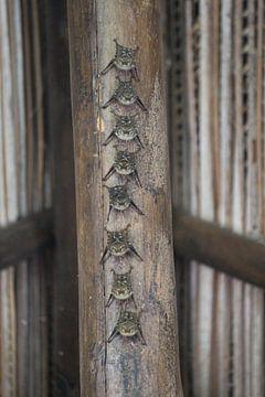 vleermuizen von Martin van den Berg Mandy Steehouwer