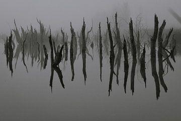 Dode bomen in het water van Anne Reitsma