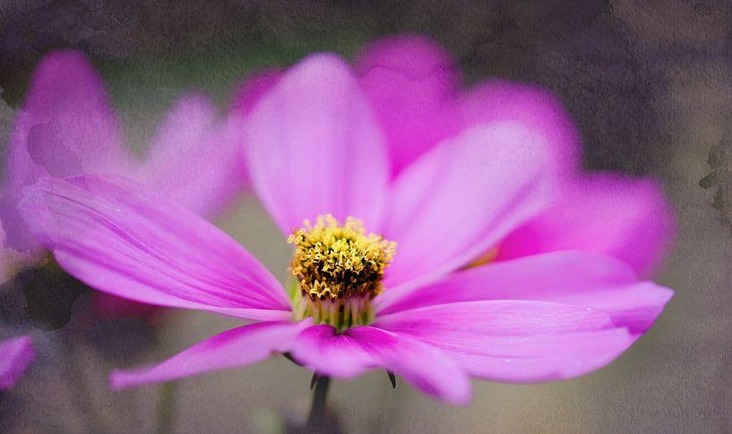 Pink Flower van Anita Servaas