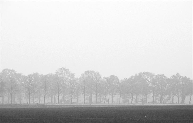Trees von Jenny de Groot