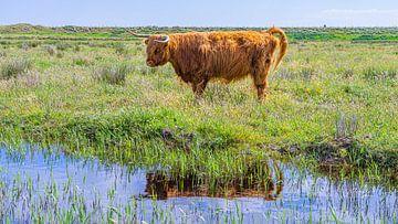 Schotse hooglander weerspiegeling in water (horizontaal) van Jessica Lokker