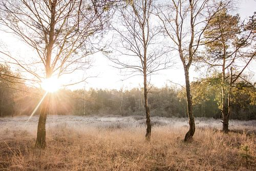 Zonsopkomst op de hei | Rijp in Nederlands landschap