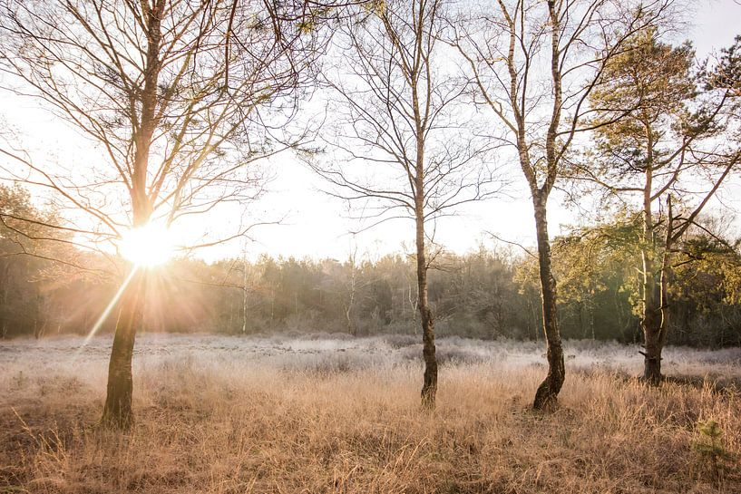 Zonsopkomst op de hei | Rijp in Nederlands landschap van Dylan gaat naar buiten