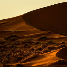 Goldene Wüste von Richard Guijt