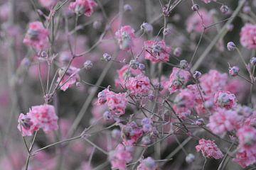 roze bloemen van Eveline De Brabandere