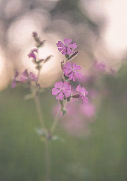Blumen Teil 146 von Tania Perneel