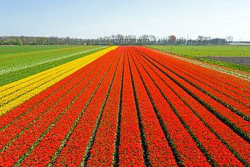 Luftaufnahme von Blumenzwiebelfeldern in der Blumenzwiebelregion in den Niederlanden von Nisangha Masselink