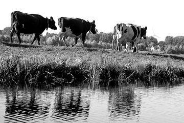 I Love Cows von Naomi Kroon
