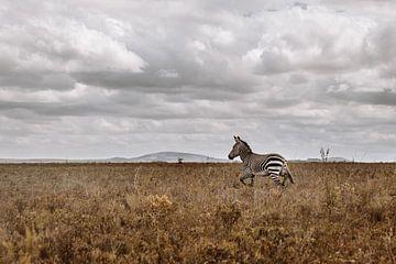 Südafrika | Afrikanische Savanne | Wilde Tiere | Zebra von Floor Bogaerts