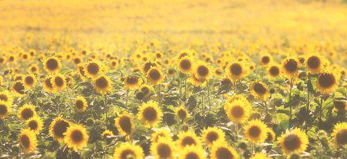 Zonnebloemen van Bart Ceuppens