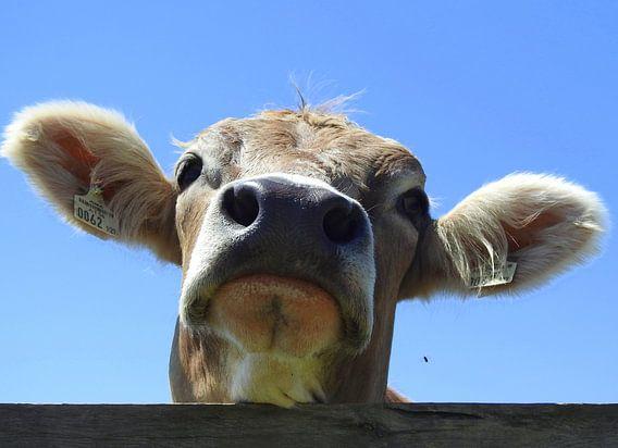 Koe Portret van Gert van der Hee