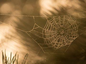 Spinnenweb bij ochtendgloren von Karen de Geus
