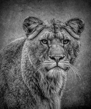 Löwen: Porträt Löwin in Schwarz und Weiß von Marjolein van Middelkoop