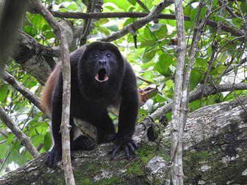 Brulaap in Costa Rica van Daniëlle van der meule