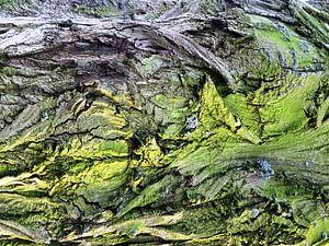 Tree Magic 74
