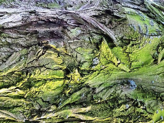 Tree Magic 74 van MoArt (Maurice Heuts)