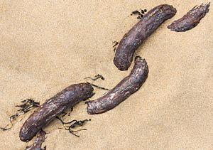 Roestige ketting in het zand van