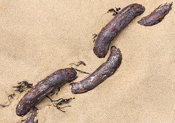 Rostige Kette im sand von Daan Kloeg