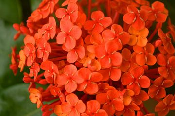 Rote Blumen von Daniek Vermeer