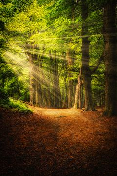 Rayons de soleil sur Arjen Uijttenboogaart
