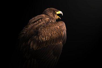 Adler von Menno Selles