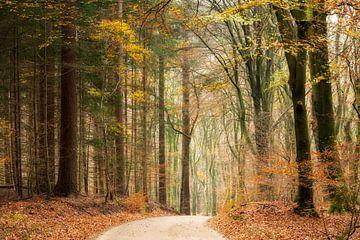Der Herbst im Speulderbos von Francis Dost
