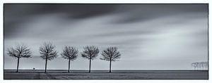 Polderbomen van