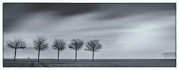 Polderbomen von Reint van Wijk