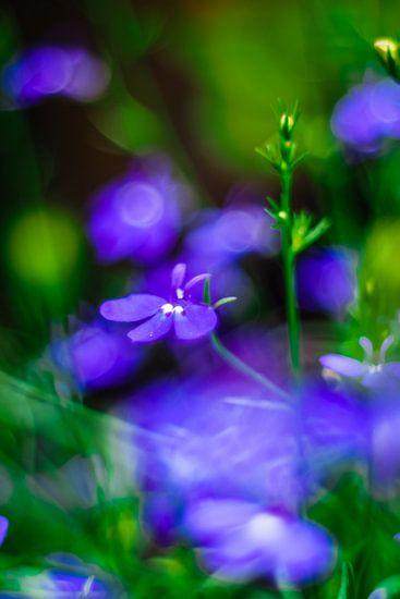 Blues van Marianne Hijlkema-van Vianen
