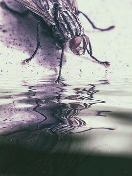 Het water - Thirsty Fly van Christine Nöhmeier