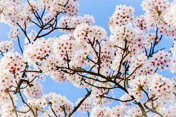 Frühlingsblüte von Mario Brussé Fotografie