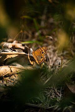 Schmetterling von Daniel Damnitz