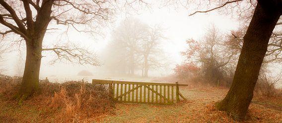 Herfst van Ton Drijfhamer