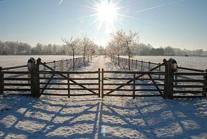 Winter op de Veluwe.