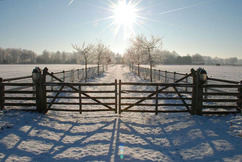 Winter op de Veluwe. van Fred Fiets