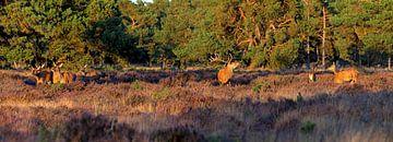 Panorama Red Deer sur Anton de Zeeuw