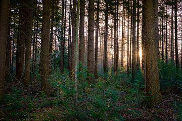 Sunrise Montferland sur Arjen Roos