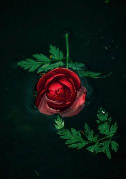 Riechen Sie an der Rose von Marjolein van Wikselaar