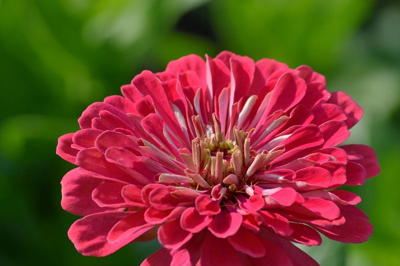 Close-up van een bloem van Atelier Liesjes