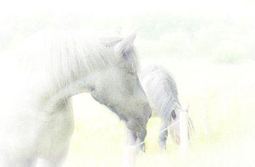 Horses sur Greetje van Son
