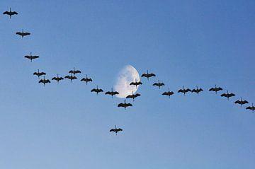 Kraanvogels met de maan van Corinne Welp