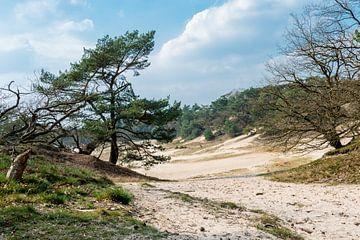 Duinen in Noord-Brabant van Rob IJsselstein
