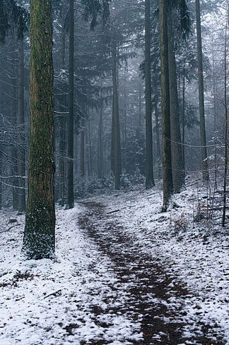 Sneeuw in een koud bos