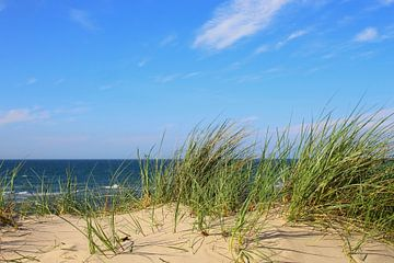 Dünen an der Ostsee sur Ostsee Bilder