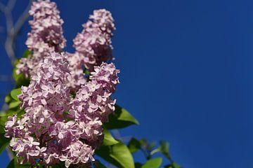Paars lila van Ulrike Leone