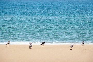 Vogels op het Portugese strand van Evelien Oerlemans